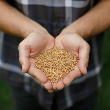 Como saber a quantidade de proteína na farinha que você utiliza?